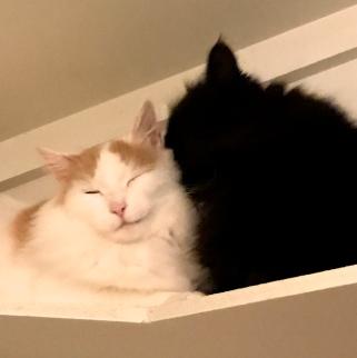 To gode venner i dobbeltbur