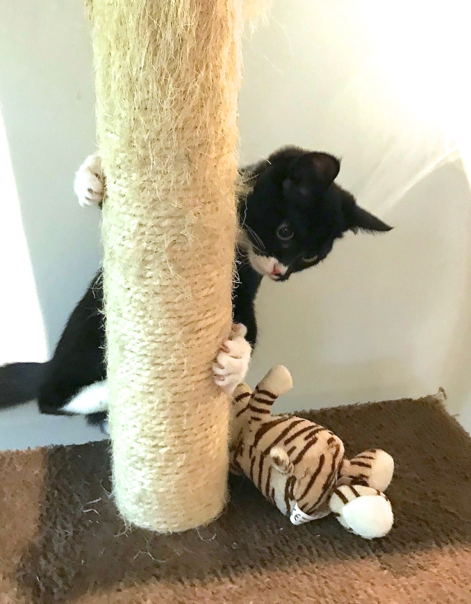 Herjetid for en kattunge